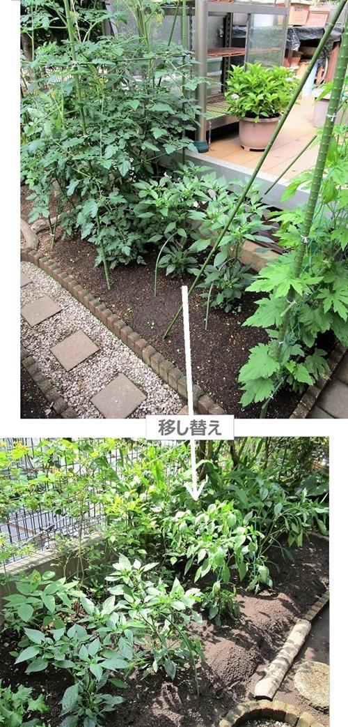 200603sisitou_utusikae