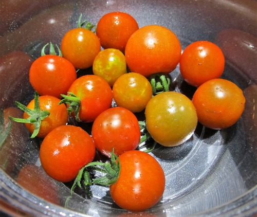 200620mini-tomato