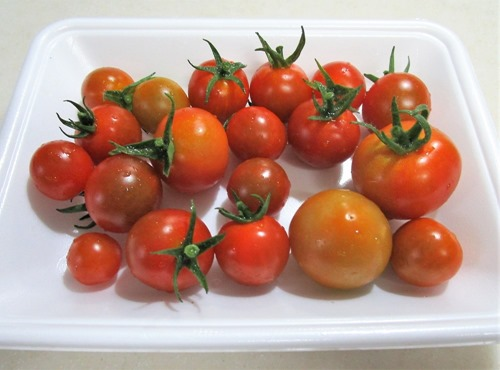 200628mini-tomato
