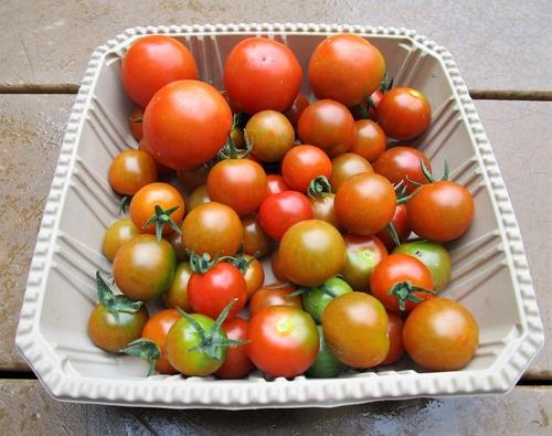 200701mini-tomato