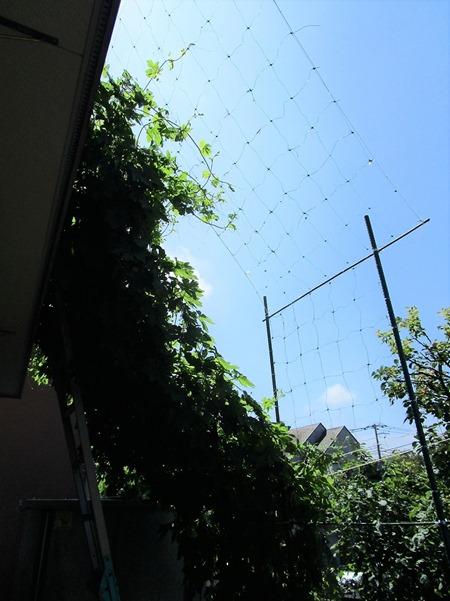 200719goojaa-net3