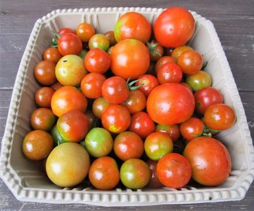 200724mini-tomato