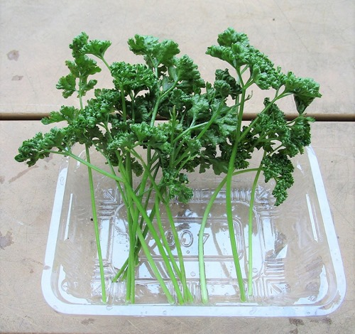 201030parsley2