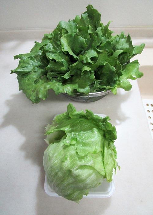 210429tama-lettuce2