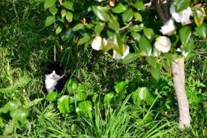 Miko The Cat