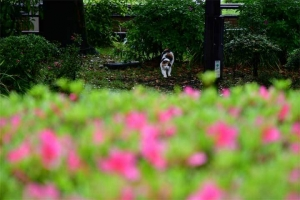 Sakura-chan The Cat (very small)
