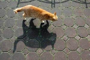日比谷公園の鍵しっぽ茶トラ猫