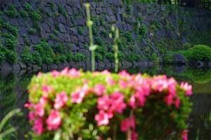 Azalea and Stone Wall