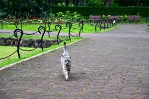 Gure The Cat