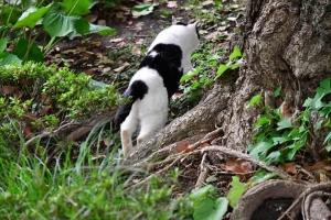 Junko The Cats