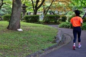 三毛猫さくら Sakura-chan The Cat and Runner