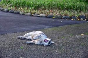 灰色猫 Gure The Cat あくび