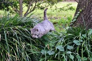 灰色猫 Gure The Cat ジャンプ