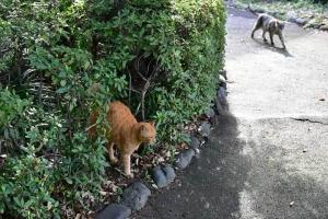 茶トラ猫と灰色猫 Chato and Gure The Cats