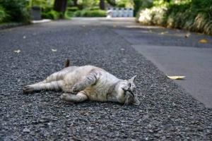 灰色猫 Gure The Cat