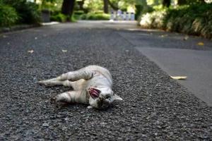 灰色猫 Gure The Cat あくび Yawning