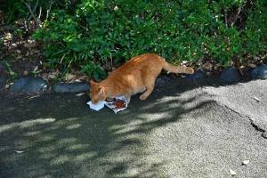 茶トラ猫 Chato The Cat