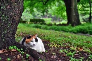 三毛猫さくら Sakura-chan The Cat 湿った日