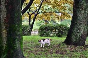 三毛猫さくら Sakura-chan The Cat 夏の公園の森
