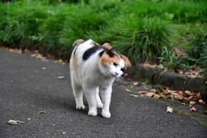 三毛猫さくら Sakura-chan The Cat スピンニングヘッド