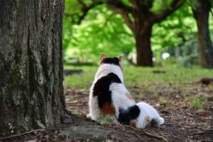座ろうとする三毛猫の後ろ姿@日比谷公園