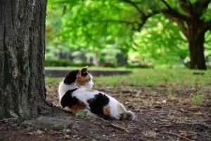 座る三毛猫の横顔@日比谷公園