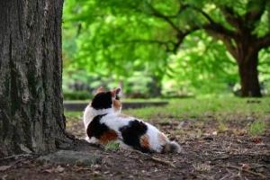 座ってチラックスしてる三毛猫@日比谷公園
