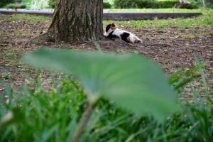 三毛猫@日比谷公園