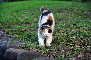 三毛猫さくら ストレッチ おはよー @日比谷公園