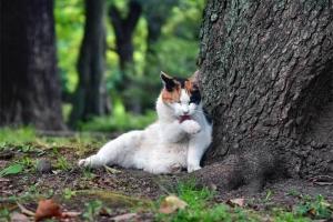 三毛猫さくら 毛づくろい 日比谷公園