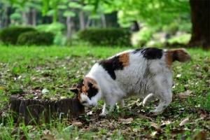 古い切り株と猫 @日比谷公園
