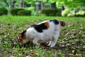 日比谷公園の猫 地面の凹みを見る