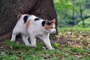 日比谷公園の三毛猫