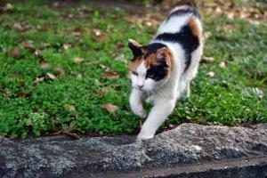 おはよう 日比谷公園の猫