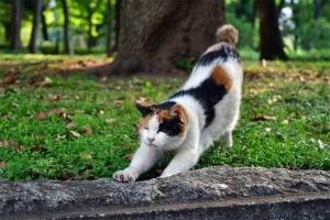 おはよー猫 三毛猫さくら のびー @日比谷公園
