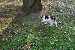 狭い日陰 クスノキの幹 日比谷公園の猫