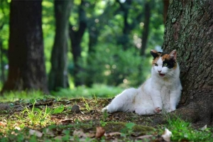 日陰猫 @日比谷公園
