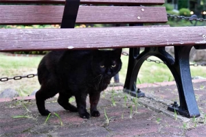 ベンチの下の黒猫 @日比谷公園
