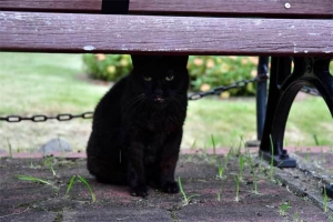 ベンチの下の黒猫