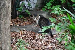 キジトラ白猫 @日比谷公園