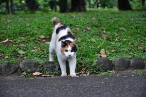 日比谷公園の三毛猫さくらちゃん