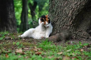 日比谷公園の三毛猫さくら Sakura-chan The Cat, Hibiya Park