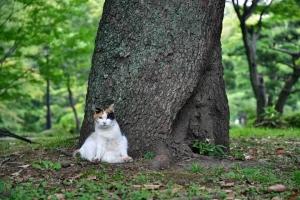 日比谷公園のクスノキと猫
