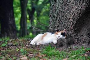 夏バテ猫 三毛猫さくら 日比谷公園