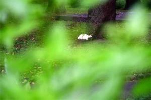 夏の緑と猫