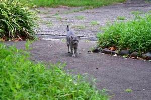 灰色猫 @日比谷公園 おはよう