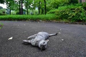 灰色猫 @日比谷公園 寝転がる