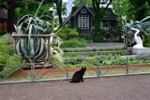 日比谷公園 ペリカン噴水、フェリーチェガーデン、黒猫
