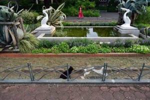 日比谷公園 ペリカン噴水、赤いチャイナドレス、黒猫