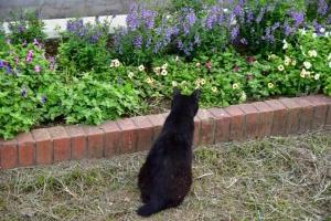 後ろ姿黒猫 @日比谷公園
